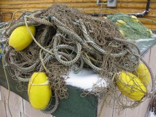 Gill nets are often used by subsistence users of the land to catch salmon, pike, and whitefish