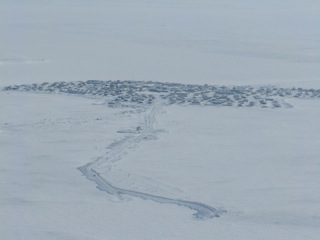 The community of Cambridge Bay, Nunavut.